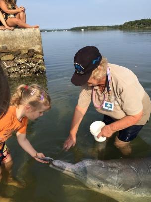 Tin Can Bay - die Delfine kommen jeden Morgen in die Bucht!