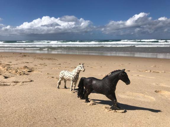 Joy's Pferde dürfen auch immer mit an den Stand
