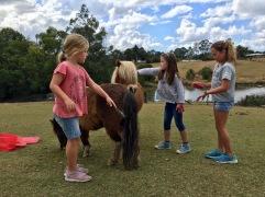 5 Pony-Mähnen auf einem Bild