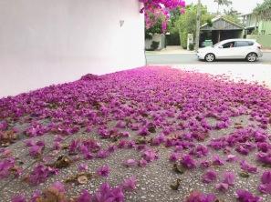 Blumenteppich beim Nachbar ...