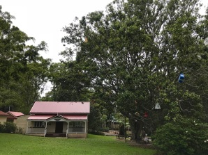 Weihnachtsbaum in Australien